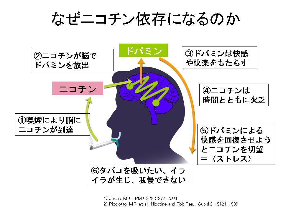 「ニコチン アセチルコリン受容体」の画像検索結果